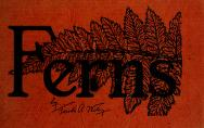 Cover of: Ferns of northeastern United States | Farida Anna Wiley